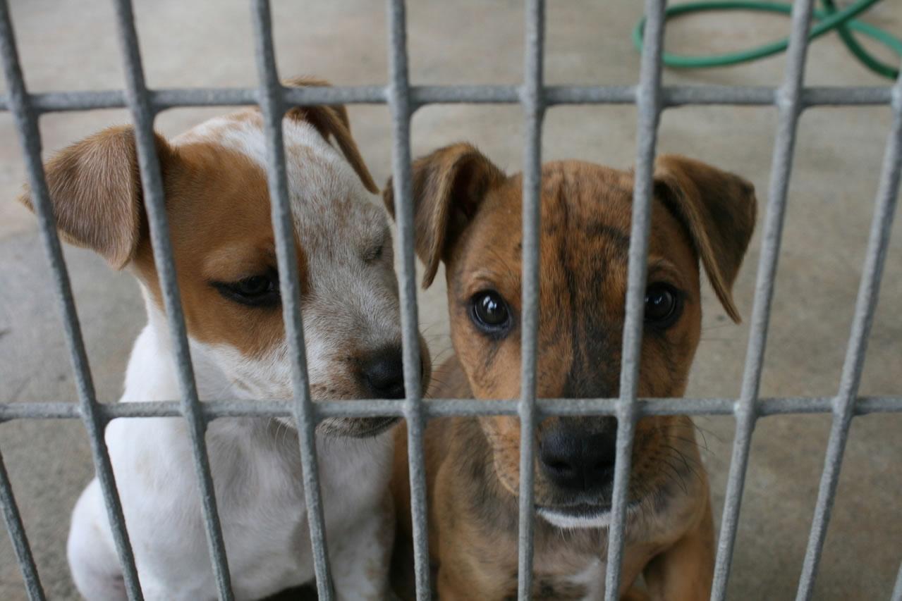Adopting a puppy